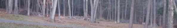 Nice panorama, Nicer if I'd seen a deer.