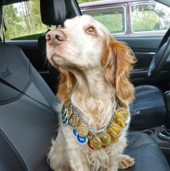 Charlie was a champion Russian Spaniel. An excellent gun dog.